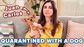 People Share How Their Dogs Are Helping Them During Quarantine // Presented By CESAR® thumbnail