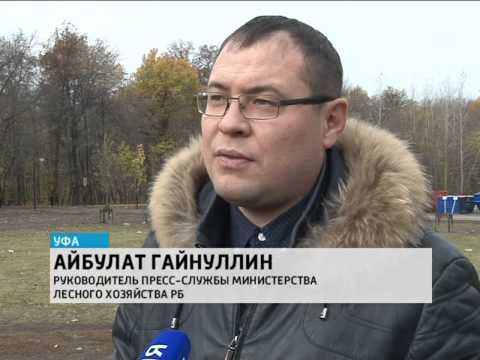Акция «Живи, лес!» в парке лесоводов Башкортостана собрала более 300 участников