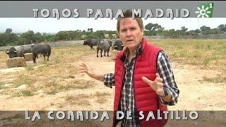 Toros De La Ganadería De Saltillo Para Madrid | Toros Desde Andalucía
