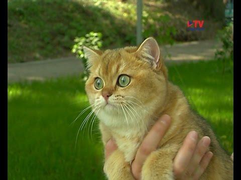 8 августа - всемирный день кошек онлайн видео