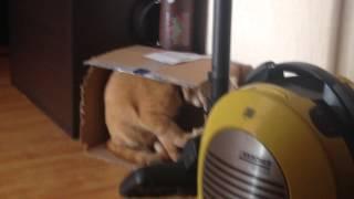 Смотреть онлайн Кота спалили когда он грыз коробку