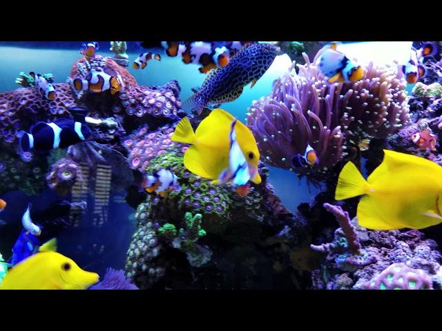 120 Gallons MVP Mixed  Reef Tank.