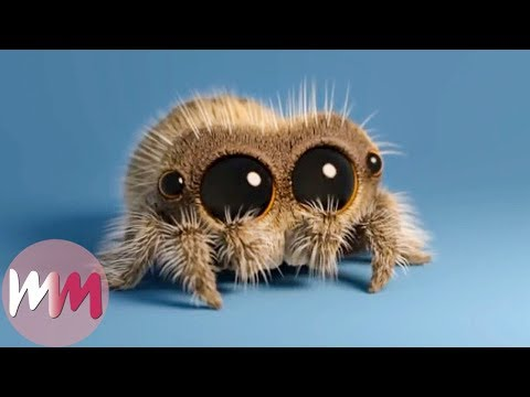 Lucas the Spider - Top 3 Facts!