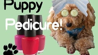 Huzzaz embed clip file polish pups nails diy dog grooming by cooking for dogs solutioingenieria Images