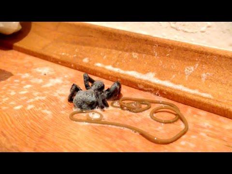 Guinea worm nagiging sanhi ng worm