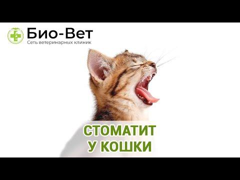 Стоматит у кошки. Ветеринарная клиника Био-Вет.