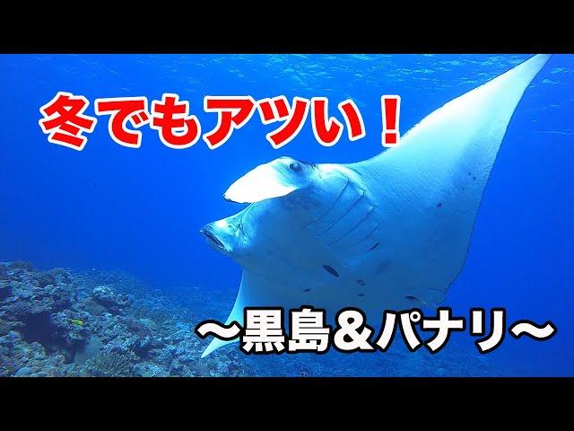 石垣島ダイビング|冬でもココはアツい!|ビーチライフ石垣島