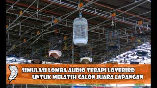 Terapi Audio Simulasi Lomba Lovebird Untuk Mengetes Mental Calon Juara