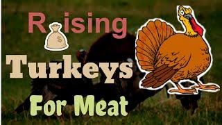 Raising Turkeys For Meat How Long