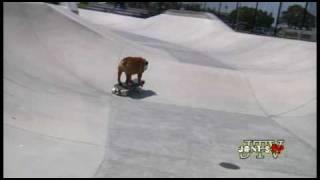 Gambar cover Tillman the Skateboarding Bulldog Skates, Skimboards, and SURFS!!