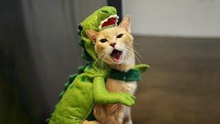 【面白い動画】 かわいい猫 - かわいい犬 - 最も面白いペットの動画 #91