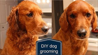 DIY Dog Grooming | How to Cut Your Dog's Hair at Home | Veronica Young