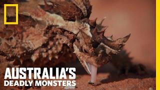 Australia's Top 3 Desert Monsters | Australia's Deadly Monsters