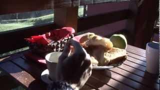 Video del alojamiento El Llugar
