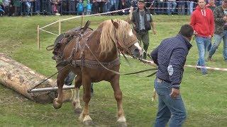 Concurs cu cai de tractiune - Proba de simplu -  Gilau, Cluj 17 Iunie 2017