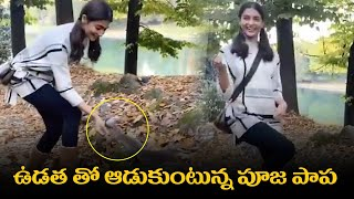 Pooja Hegde Playing With Squirrel In The Forest | Pooja Hegde