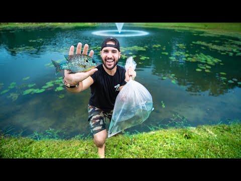 Stocking POND With 150 JUMBO Wild Bluegill!! (10lb bass caught)