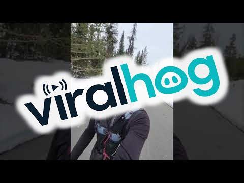 Homem se desepera ao ser seguido por urso
