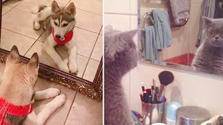 Funny reactions of cats and dogs look in MIRROR compilation