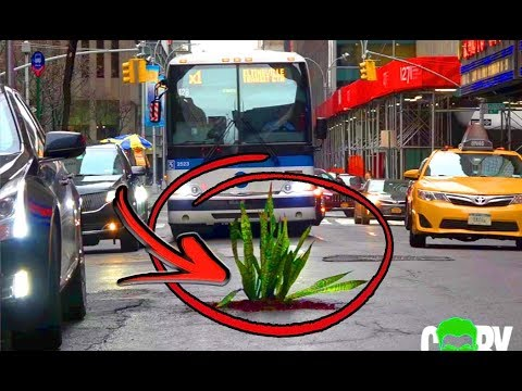 Interesting Video: Angry man plants trees in potholes after his car tyre spoilt