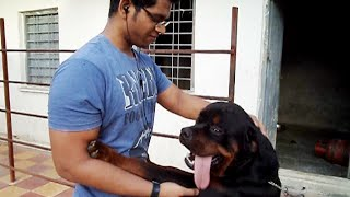 How to train your ROTTWEILER - 6 Tips - Ft. my canine buddy, BRUTUS