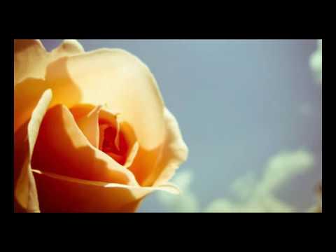 Música Stolen Rose