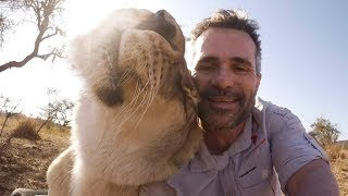 How To Talk To Lions #AskMeg   The Lion Whisperer