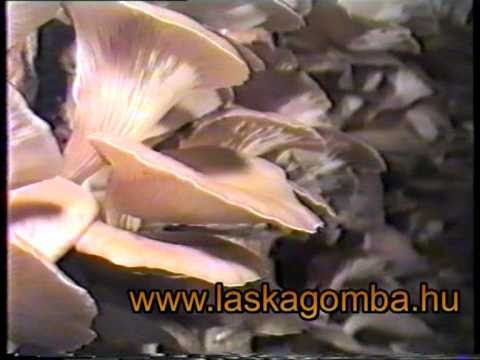 Paraziták laposférgek kezelése