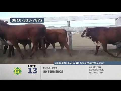 Lote Terneros en San Jaime de la Frontera (Entre Ríos)