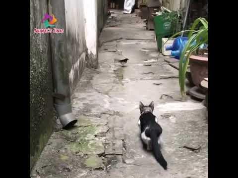 cat hunting skills, cat video cat hunting
