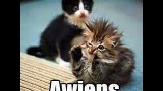Cat Park Tycoon #2! OMG MORE KITTIEZ!