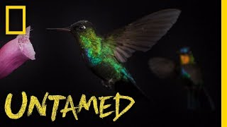 Ever Wondered What a Hummingbird Looks Like in Slow Motion? | Untamed