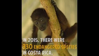 Help Rescue Wildlife in Costa Rica!