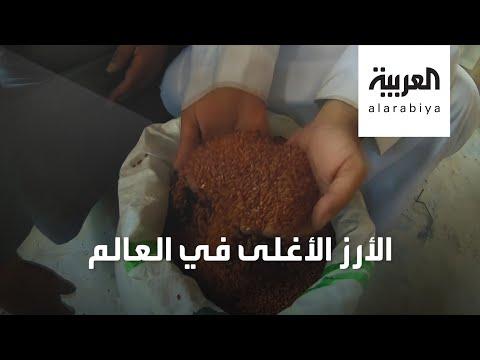 العرب اليوم - شاهد: كيف يتم زراعة الأرز الحساوى الأحمر