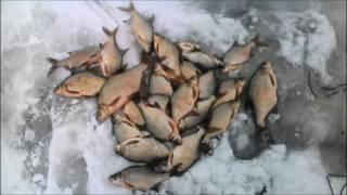 Рыбалка на леща в омске