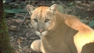 Puma - Reserch in California