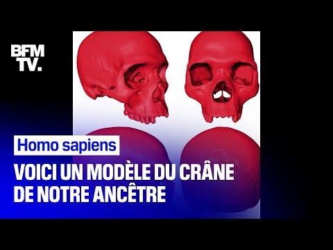 Ce paléontologue a modélisé le crâne de l'homo sapiens, notre ancêtre commun Ce paléontologue a modélisé le crâne de l'homo sapiens, notre ancêtre commun