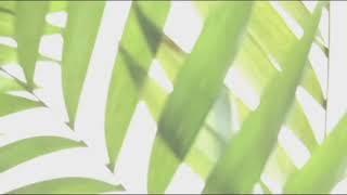 Palm Sunday Meditation
