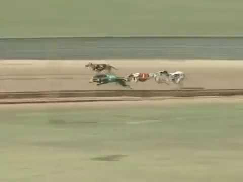 Race 37