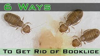 How to Get Rid of Booklice