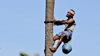 Jaggery (Brown Sugar) production from palm trees