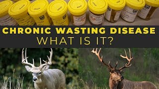 Watch Video - Chronic Wasting Disease - What is it?