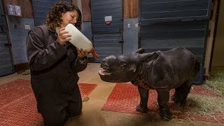 Big Bottle for Big Baby Rhino