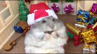 Tiny Santa Hamster Will Get You Excited For Christmas