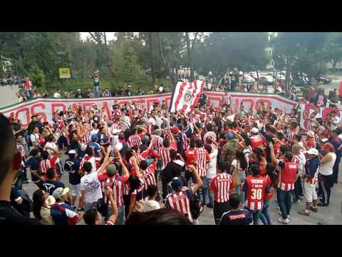 """""""Dale Dale Dale Rebaño - Barra Insurgencia - Previo al Clásico Nacional - América Vs Chivas"""" Barra: Barra Insurgencia • Club: Chivas Guadalajara"""
