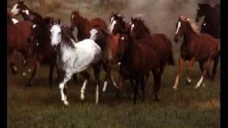 Chantal Kreviazuk - Wild Horses (Piano Acoustic Rolling Stones Cover)