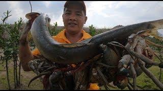刀仔赶海抓爽了,大螃蟹勾出7只,70公分大鱼搁浅,发大财啦