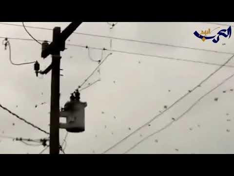 العرب اليوم - شاهد : السماء تمطر عناكب وتثير ذعر السكان في البرازيل
