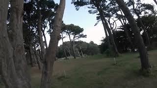 HALF PACK FPV FREESTYLE - Tree Tops 3 - FLOWZILLA