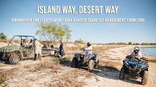 Island Way, Desert Way - Kiwirrkurra and li-Anthawirriyarra Rangers share cat management knowledge